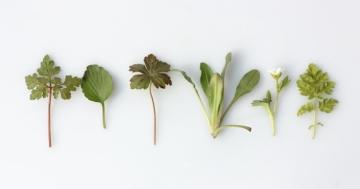 plantes antivirales